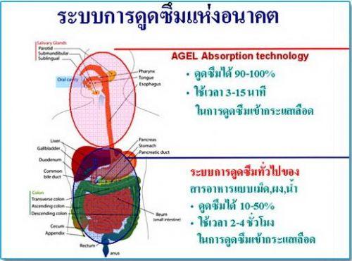 Agel Product เอเจล ผลิตภัณฑ์ ดูดซึม absorption กระแสเลือด