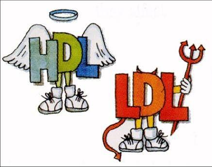 ประโยชน์ HDL