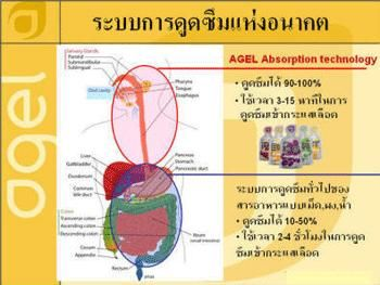agel absorption