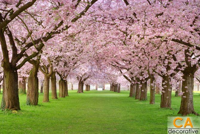 ต้นไม้สีชมภู