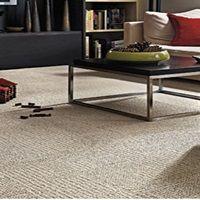 carpet ��� ���