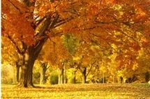 ภาพวิวต้นไม้ในฤดูใบไม้ร่วง_Photowall