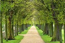 ภาพวิวทางเท้าในสวน_Photowall