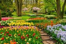 ภาพวิวสวนดอกไม้_photowall