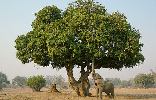 เคล็ดลับหน้าอกสวยด้วยธรรมชาติ ของผู้หญิงอัฟริกา