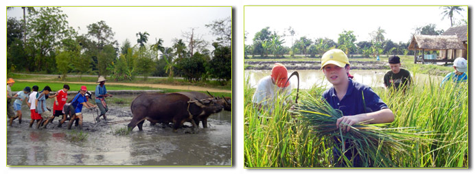 Tour Thailand, Buffalo Village