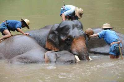 Elephant Training Camp, Lampang, Thailand