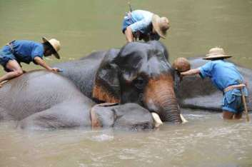 Elephant Training, Lampang