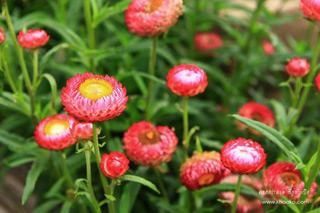 ลมหนาว สายหมอก ดอกไม้ และสตรอเบอรี่ หนาวนี้ที่เขาค้อ