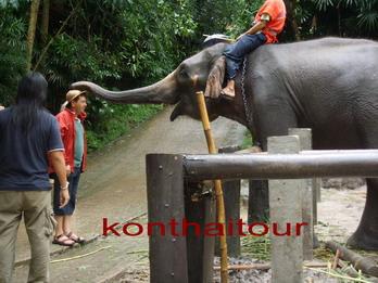 ช้างแสนรู้ ช้าง เชียงใหม่ ,elephant show chiang mai