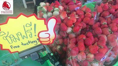 🍓 Konthaitour เชิญเที่ยวเทศกาลสตรอเบอรี่ 9-11 กุมภาพันธ์ 2561 จังหวัดเชียงใหม่ เป็นแหล่งปลูกที่ใหญ่ที่สุดแห่งหนึ่งในประเทศ (Chiang mai Strawberry Festival)  🍓สามารถเข้ามาชมตั้งแต่กระบวนการเตรียมแปลง สายพันธุ์ การดูแล เก็บเกี่ยว ทั้งยังสามารถชิมรสสตรอเบอร์รี่สดๆ หอมหวาน ปลอดสารพิษจากไร่สตรอเบอร์รี่ดังๆ  🍓นอกจากนี้ยังมีการจัดกิจกรรมอื่นที่น่าสนใจมากมาย พูดมาสะยาว รีบเที่ยวมา ชิมกัน เจ้า