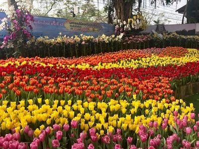 หมื่นแสนมวลบุปผา งามตาทั่วเวียงพิงค์ มหกรรมไม้ดอกไม้ประดับ  ✨ 2-4 กพ 61 พร้อมขบวนสุดอลังการ ตกแต่งประดับดาไม้ดอกนานาชนิดอลังการ  พร้อมการแสดงวัฒนธรรมล้านนาและดนตรีแบบจัดเต็ม กว่าทุกปี  💥 Chiang Mai Flower Bloom Festival 2-4 Feb 2018  👉🏻 It a greatest flower show, featuring a parade of floats made with colorful flowers, Flowers Festival parade contest and loads of exotic plants and flowers on display.  😊 Hope to See you in Feb 2019
