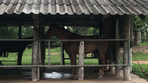 🚩คนไทยทัวร์ แนะนำ จุดเช็คอินสุดสวยสไตล์ตะวันตก ที่ ลานเนินนุ่ม หรือ ฟาร์มคาวบอย  🍀มีกิจกรรมหลากหลายมาก เช่นขับ ATV ขี่ม้าชมป่าเขาลำเนาไพร ป้อนอาหารสัตว์ อาบน้ำให้น้องแกะ ถ่ายรูปแกะ  ⚡มาสร้างความสนุก ร่วมกัน กับ คนไทยทัวร์นะเจ้า ⚡Farm Cowboy Army Riding Club ,Chiang Mai