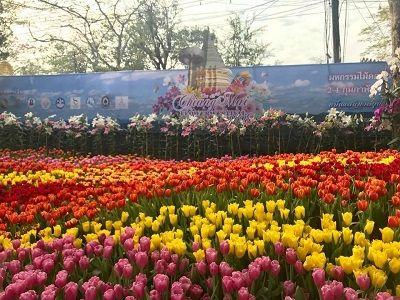 📢คนไทยทัวร์ แนะนำ งานมหกรรมไม้ดอกไม้ประดับเชียงใหม่   1 ก.พ – 3 ก.พ. 2562 พร้อมขบวนสุดอลังการ