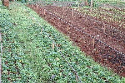 Konthaitour   พามา สัมผัส   แหล่งท่องเที่ยวเชิงเกษตร / ฟาร์มผักออร์แกนิค ที่ monkey farm