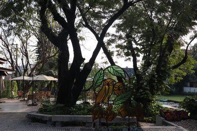 คนไทยทัวร์ พาสัมผัส แสงแรกของวัน ป่ากลางเมือง ที่  Early Owls  คาเฟ่  หรือ สวนช้างเผือก