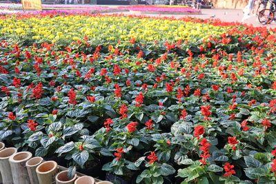 เตรียมต้อนรับ งานมหกรรมไม้ดอก-ไม้ประดับเชียงใหม่ วันที่ 1-3 ก.พ. 2562 นี้ 🌸🌷🌹