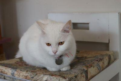 คนไทยทัวร์ แนะนำ  CAT BROTHERS Cafe เชียงใหม่