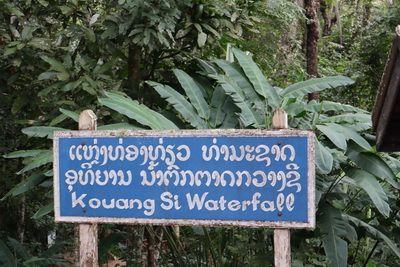 คนไทยทัวร์ พาเที่ยว ที่ น้ำตกตาดกวางสี สวรรค์กลางป่าแห่งหลวงพระบาง