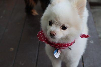 คนไทยทัวร์ พาเที่ยว ท่านที่ชื่นชอบ น้องหมา   Ketawa  Pet Friendly Kafé  ( Dog )  เชียงใหม่