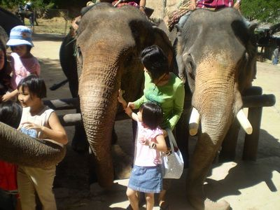 elephant lover tour chiang mai