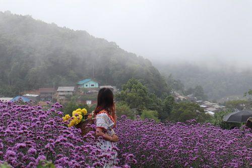 ❣ Mon Jam ,Chiang Mai ❣  💖 Green season แม่สาวน้อย ณ ม่อนแจ่ม