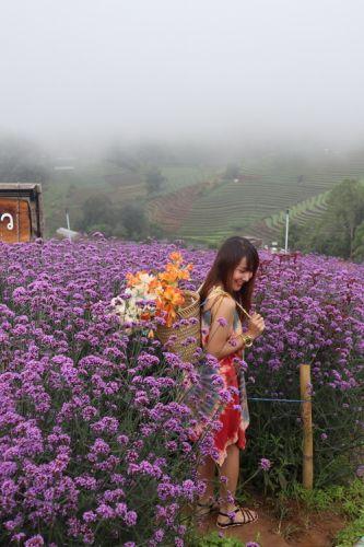❣ Mon Jam ,Chiang Mai ❣  💖 Green season แม่สาวน้อย ยังคงงดงามเสมอมา แม้กาลเวลาจะเปลี่ยนแปลง แต่ความจริงใจ ของเธอไม่เคยเปลี่ยน ณ ม่อนแจ่ม