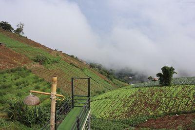 สุดขอบฟ้าที่ Phuwin Cafe @Mon Jam ,Chiang Mai