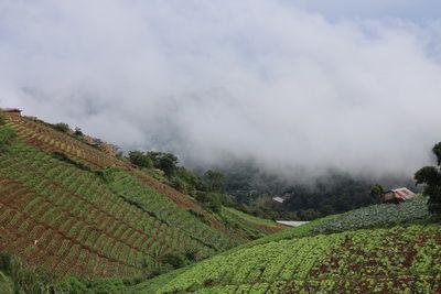 สุดปลายฟ้าทะเลหมอก ที่ ม่อนแจ่ม เชียงใหม่  / Mon Jam Mountain, Chiang Mai