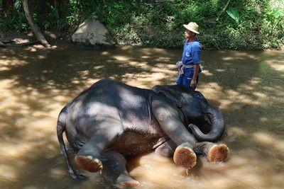 คนไทยทัวร์ พาเที่ยว หมู่บ้านช้างที่ใหญ่ที่สุดในภาคเหนือ ที่ ปางช้างแม่สา , เชียงใหม่