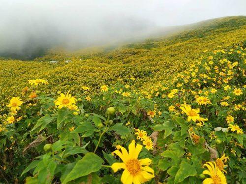 🌼คนไทยทัวร์ ขอเชิญ ชมทุ่งดอกบัวตองบาน ที่แม่ฮ่องสอน  🌼Blossoming Bua Tong Flowers in Maehongson  🌼เปิดเทศกาลท่องเที่ยวดอกบัวตองบาน วันที่ 8 พฤศจิกายน 2562 นี้ และจะบานเต็มที่ช่วงกลางเดือนพฤศจิกายน มีระยะเวลาบานสวยเต็มที่ ราวๆ 2 อาทิตย์เท่านั้น  📌เลือกแพ็กเก็จทัวร์ที่ท่านชื่นชอบ สถานที่เที่ยว เลือกวันเดินทาง ออกเดินทางได้ทุกวัน ทริปส่วนตัวทุกคณะ 📌สามารถทำทริปได้ 3-4 วัน