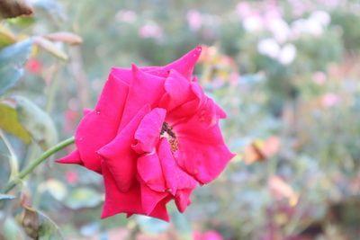 6  ทุ่งดอกไม้ ยอดฮิตของ จ.เชียงใหม่ สายแชะ สายสวย สายหล่อ ห้ามพลาด  📸