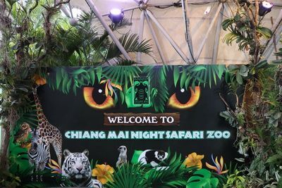 🦁 คนไทยทัวร์ พาเที่ยวชมเชียงใหม่ไนท์ซาฟารี สวนสัตว์กลางคืน