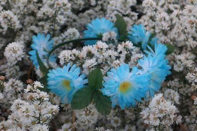 🌷 เริ่มต้นปีใหม่นี้ คนไทยทัวร์ พาชม สวนดอกคัตเตอร์ สีขาว ที่ บ้านนาฟลาวเวอร์  🌺ความหมายของดอก คือ แม้คุณจะไม่มองฉัน เแต่ฉันมีแต่คุณเสมอ หรือ ดอกไม้ผู้เสียสละ นั้นเอง  💐เจ้าของสวน ทั้งครอบครัวใจดี น่าสนับสนุน ทั้งบ้าน เอ้า มาเถอะ  🌾มิตรภาพก็เหมือนกับดอกไม้ ถ้าเราดูแลรักษามัน โลกนี้จะเป็นสวนดอกไม้  🌾friendship is like a flower , when one take care of it, the world become a garden.  🌺Cutter Flower Garden ,Chiang mai AT Bannaflower Garden 🇹🇭
