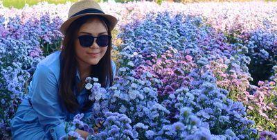 เดือนแห่งความรัก เชียงใหม่เบิกบานเมืองแห่งดอกไม้และสาวสาย