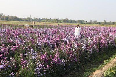 🌷คนไทยทัวร์ พาชม สวนทุ่งดอกมากาเร็ตสีม่วง & สีชมพู เชียงใหม่ ที We Flower Village ,Chiang Mai  🎡วิวกลางทุ่งนาภูเขา ล้อมรอบ ราวกับอยู่ในสวนดอกไม้แถบยุโรป   วิวสวนพื้นที่เกือบ 3 ไร่  🌸ดอกมากาเร็ต สีม่วงชมพู หมายถึง ความจริงใจ /Margaret Flower  🌸Margaret flower garden ,Chiang Mai Flowers are in full bloom throughout Chiang Mai.