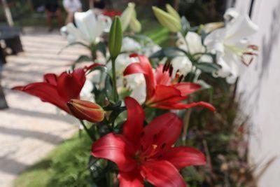 🌷คนไทยทัวร์ แวะเที่ยวชม ร้านเปิดใหม่ คาเฟ่สวนดอกไม้ ส่งกลิ่นหอมทั่วทั้งสวน ที่ ร้าน กลิ่นไม้หอม เชียงใหม่
