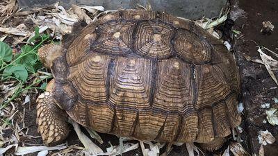 Konthaitour Interview ธุรกิจ Farm เชียงใหม่ เลี้ยงเต่ายักษ์ ซูคาต้า ใหญ่ อันดับ 3 ของโลก กับ พี่โอ้ก