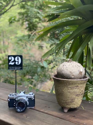 Konthaitour Photo Portrait ที่  Wild Coffee & Bistro , Chiang Mai