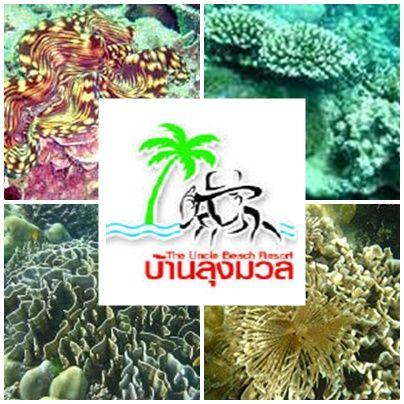 กิจกรรมแนะนำ ดำน้ำชมปะการังเกาะทะลุ