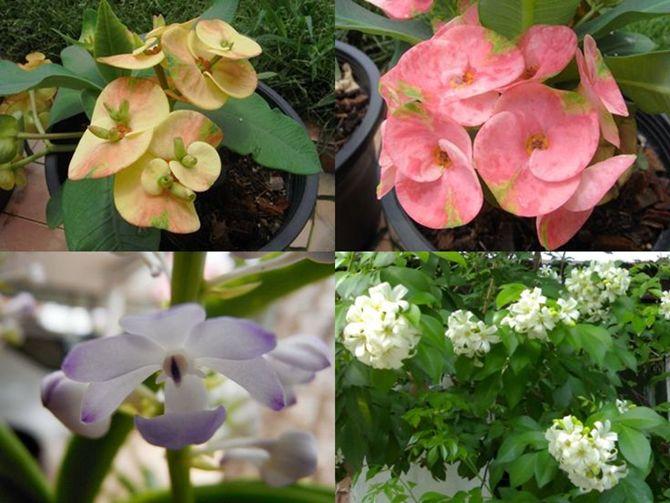 ต้นไม้มงคล ดอกไม้มงคล ที่น่าปลูกมีมากมาย