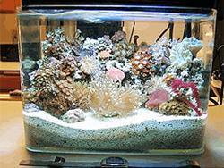 เคล็ดลับวิธีการทำความสะอาดตู้ปลาแบบง่ายๆ