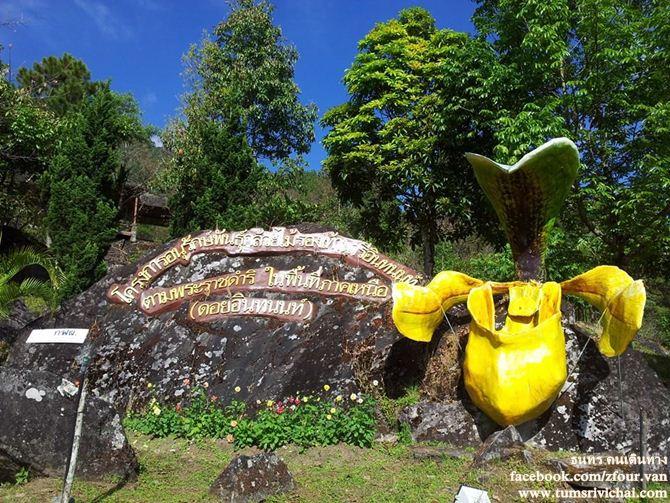 โครงการอนุรักษ์พันธุ์กล้วยไม้รองเท้านารีอินทนนท์ ตามพระราชดำริ