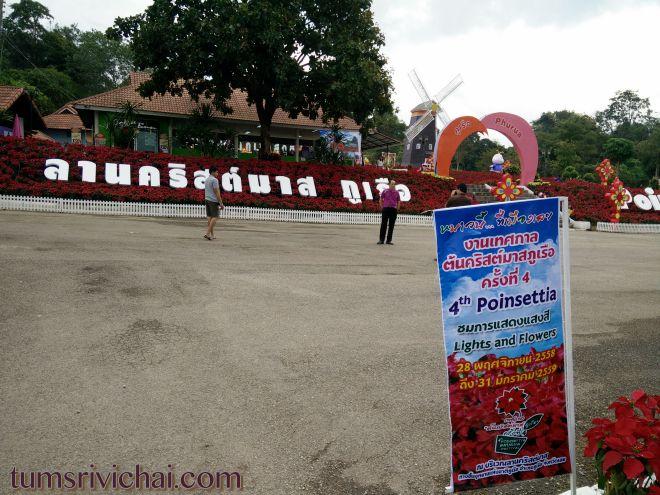 หนาวนี้ที่เมืองเลย งานเทศกาลต้นคริสต์มาสภูเรือ 2558 ครั้งที่4