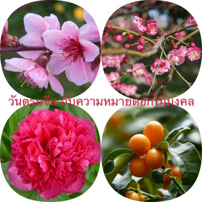 วันตรุษจีน 2019 สัญลักษณ์และความหมายของดอกไม้มงคล2562