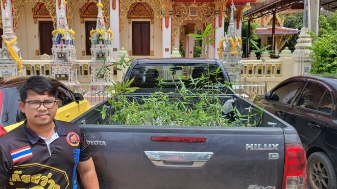 ไผ่บงหวานเพชรน้ำผึ้ง นครราชสีมา ขับรถส่งถึงอำเภอเมือง