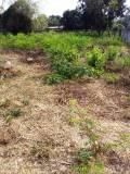Property No. LSS-315