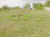 Property No. LSS-243