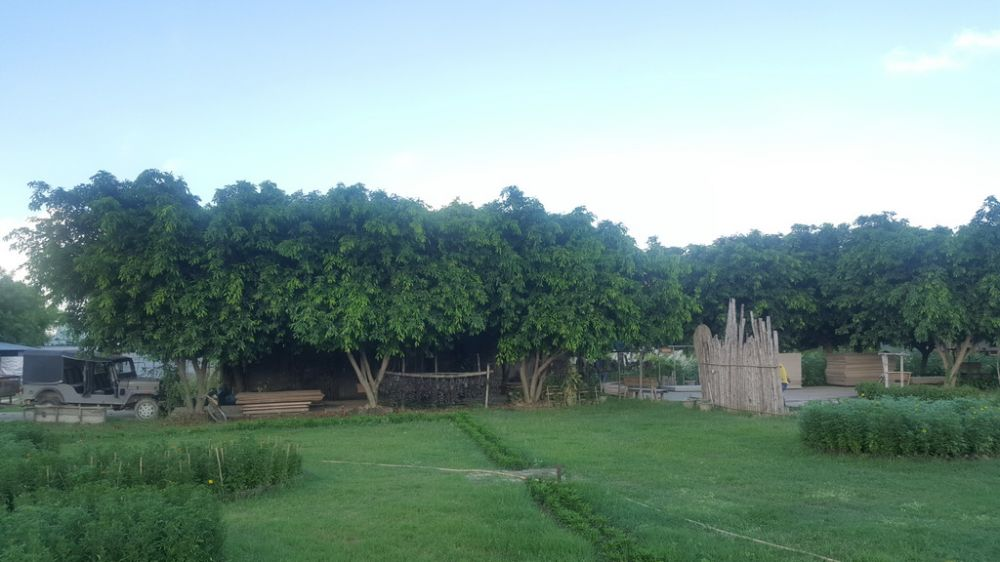 สวนป่าต้นไทร
